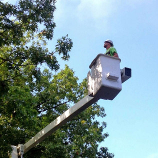 tree services christiansburg va